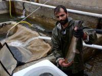 Balık Üretimiyle Ekonomiye Katkı