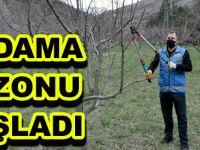 GÜMÜŞHANE'DE BUDAMA SEZONU BAŞLADI